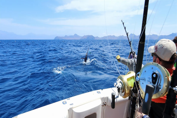 Vallarta Shores-Puerto Vallarta-Activities-Fishing in Banderas Bay
